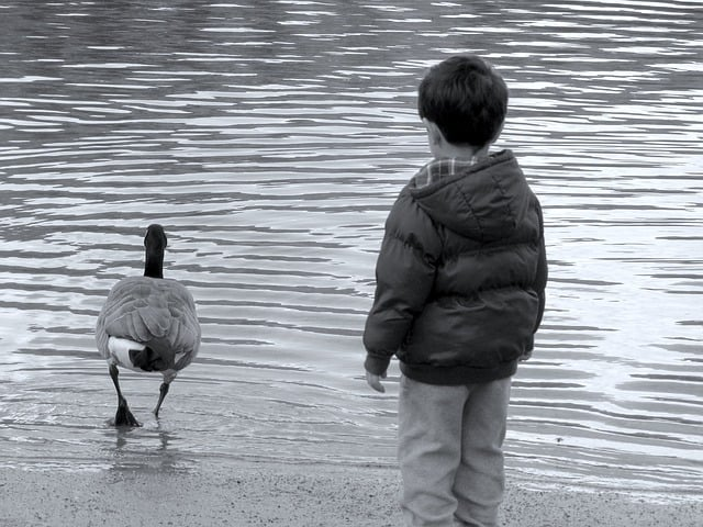 A child staring at a duck in Coquitlam, BC